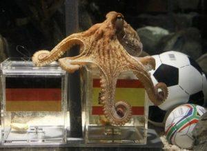 Paulle poulpe voyant de la coupe du monde 2010