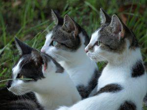 Rêver de beaucoup de chats signification