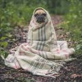 Rêver de chiens significations