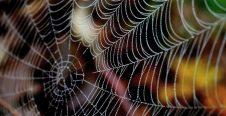 Rêver d'une toile d'araignée significations