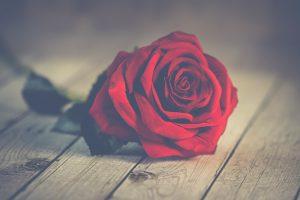 Le rituel de la rose