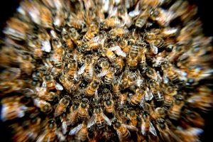 Signification de rêver d'un essaim d'abeilles