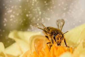 La symbolique de l'abeille