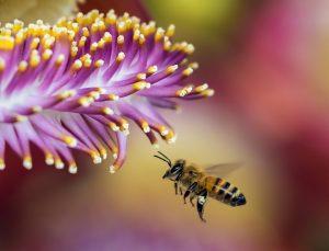 Signification de rêver d'une abeille qui vole