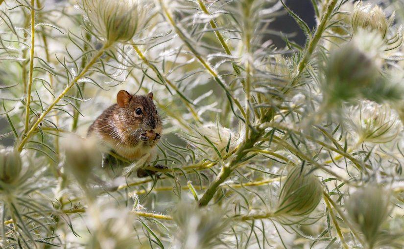 Significations de rêver de souris