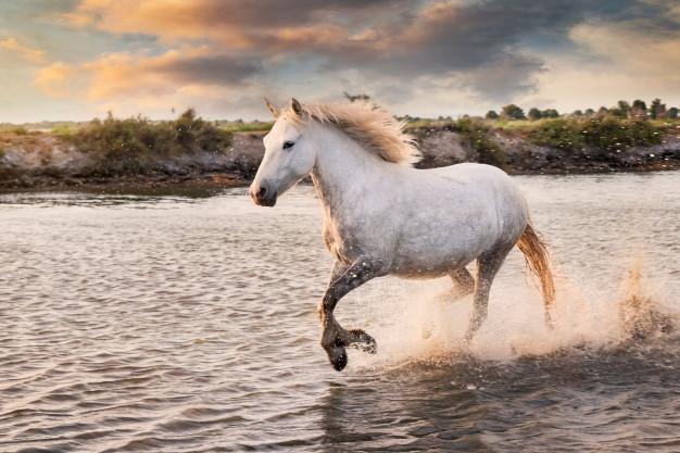 rever de cheval sauvage