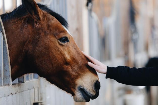 communication animale medium