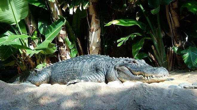 rever de crocodile signification