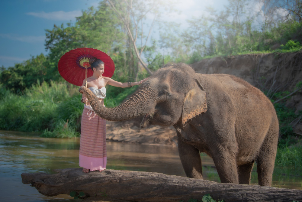reve elephant