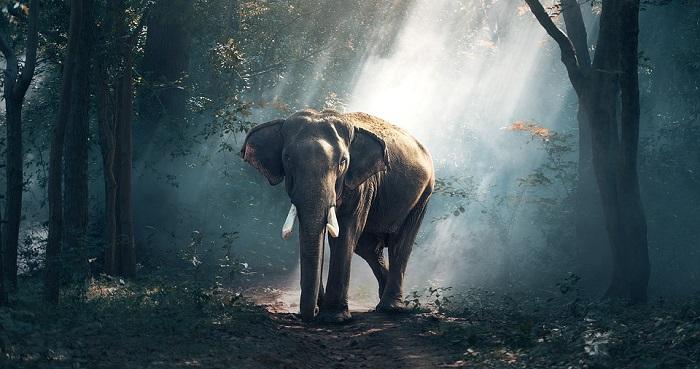 signification reve elephant